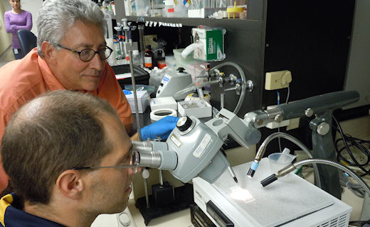 Scientists Jimmy Becnel and Al Estep conducting micro-injection of adult mosquitoes as part of gene silencing experiments.