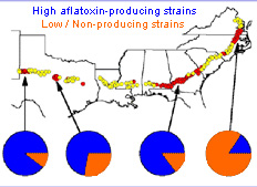 Picture showing peanut-growing regions having severe aflatoxin outbreaks and dominated by toxigenic strains of Aspergillus flavus (1997).