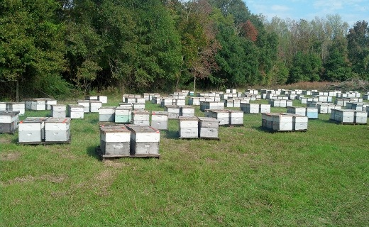 Commercial Beekeeper Apiary