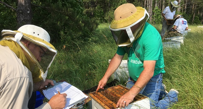 Bee scientist kneeling beside a colony of honey bees collecting and recording data.