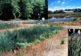 Treatment constructed wetland