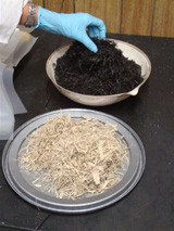 Biochar from plant residue