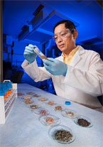 Chemist Pei Chen prepares extracts, photo by Peggy Greb