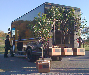 Corporate sponsor UPS ships the trees