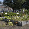Student Discovery Garden on opening day