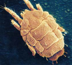 Close-up photo of mite