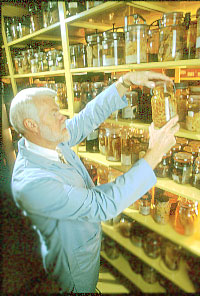 Photo: A research scientist at the US National Parasite Collection selects specimens for study.