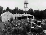 Photo: Flowering experiments at Arlington Farms,1930s