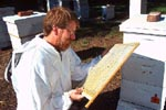 Photo: Researcher with honey bee hives