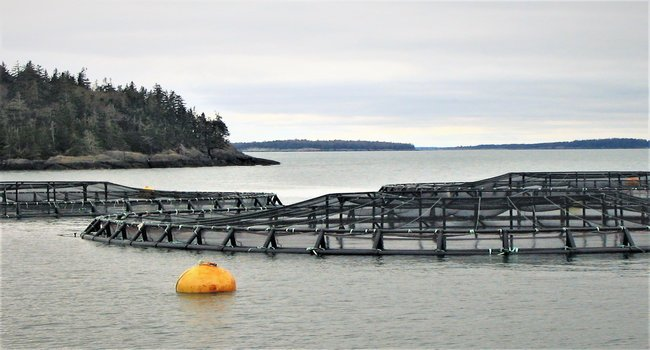 Net Pens off the coast of Maine