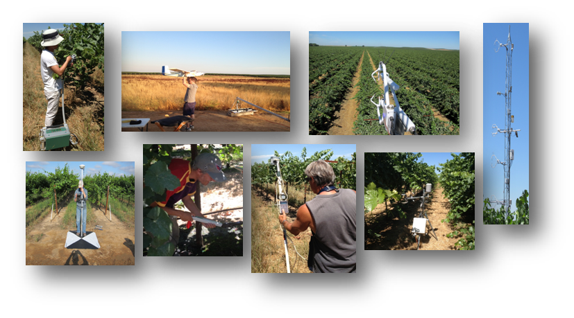 /ARSUserFiles/80420510/GRAPEX/field_work_collage.png