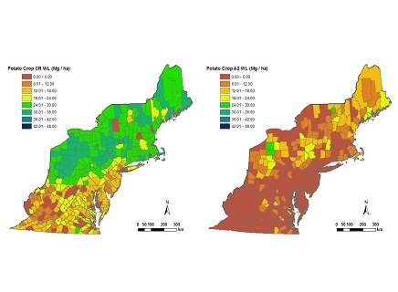 Maps of northeast potato production under current climate conditions (left) and mid-century worse case climate scenario without adaptation (right).