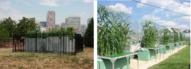 Research plots in Baltimore and outdoor growth chambers