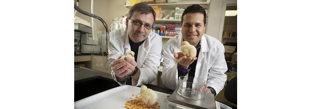 Ray Glahn and Elad Tako have produced a new maize variety that has more iron bioavailability