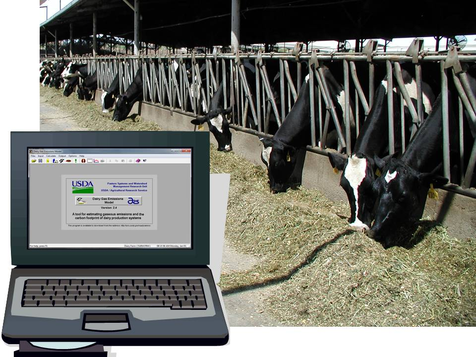 Cows feeding in background computer model in foreground