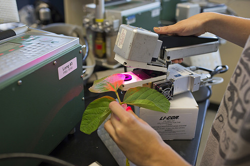 RIPE researchers measure the photosynthetic efficiency of soybean plants