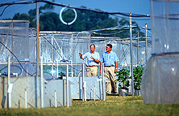 Scientists Joe Miller and Allen Heagle discuss an experiment on the effects of elevated carbon dioxide and ozone on soybeans.