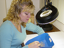 Agronomist Melanie Newman sorts through newly harvested seeds to remove broken ones: Link to photo information