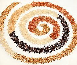 Photo: Different color rice layed out in a spiral pattern. Link to photo information