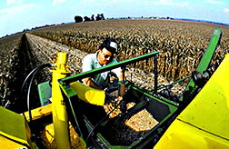 Agricultural engineer Kenneth Sudduth examines corn from this combine's grain flow sensor.
