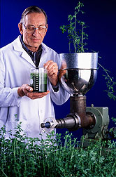 Dr. Koegel expresses juice from transgenic alfalfa
