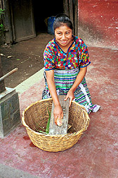 A Guatemalan woman shells corn for tortillas; Guatemalan corn sometimes is high in toxins known as fumonisins. Link to photo information