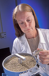 Photo: Ruth Mangum prepares foxtail weed seeds for a greenhouse experiment. Link to photo information
