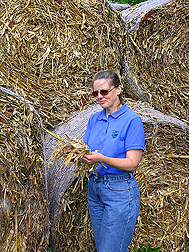 Jane Johnson evaluates sample of corn stover from one of the large bales piled behind her. Link to photo information