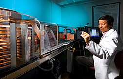 Photo: ARS molecular biologist Z. Lewis Liu holds a yeast genome microarray, or 'gene chip' that determine which genes, and networks of genes control conversion of plant sugars to ethanol. Link to photo information