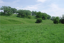 Pasture of Hidden Valley grass. Link to photo information.