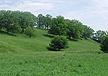 Hidden Valley grass