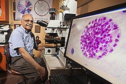 ARS microbiologist Jitender Dubey examines a Toxoplasma gondii specimen with a compound microscope. Link to photo information