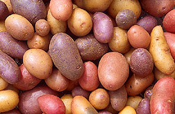 Photo: A variety of raw, unpeeled potatoes. Link to photo information