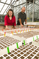 Photo: Research associate and geneticist plant a broccoli crop. Link to photo information