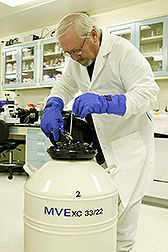 Entomologist Roger Leopold places screwworm embryos in a liquid-nitrogen storage unit: Link to photo information