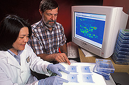 Photo: Plant physiologists Charlene Tanaka and Bill Hurkman compare protein patterns in wheat during grain development. Link to photo information
