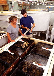 Laura McConnell and Jennifer Harman-Fetcho in the Horn Point oyster hatchery. Link to photo information