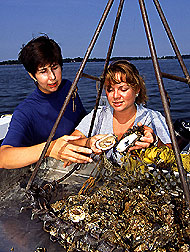 Laura McConnell and Jennifer Harman-Fetcho examine oysters. Link to photo information