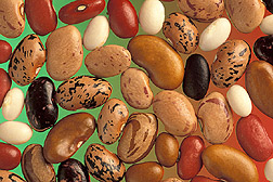 Beans. Click the image for additional information about it.