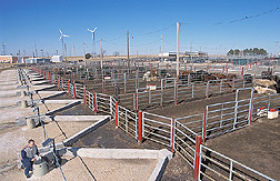 Photo: Experimental feedlot in Bushland, Texas, built for study of the environmental effects of feedlots. Link to photo information