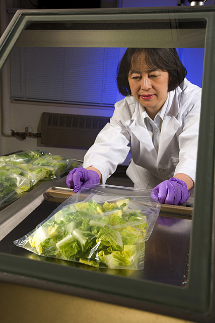 In a study to test package film permeability and shelf life of fresh-cut produce, food technologist Yaguang Luo prepares to seal romaine lettuce. Photo by Peggy Greb.