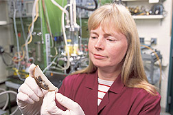 Photo: Patricia Slininger examines a section of a potato exhibiting advanced symptoms of dry rot caused by the fungus Fusarium sambucinum.