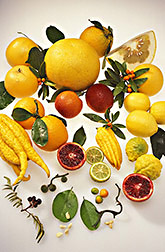 Various citrus fruits, vegetative tissues and seeds. Link to photo information