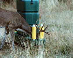 A buck feeds from a plastic 4-poster. Link to photo information