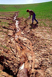Severe soil erosion in a wheat field. Link to photo information