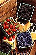New ORAC method helps measure antioxidants in berries and other foods.