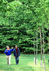 Photo of plant geneticist Alden Townsend (left) and gardener Thomas Abell observing the growth of American elm selections.