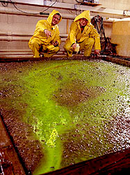 ARS agricultural engineer Dennis Flanagan (left) use a green dye to observe runoff patterns from simulated rainfall.