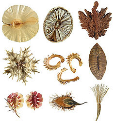 Display of nine close-ups of seeds. Click image for more information about the seeds.