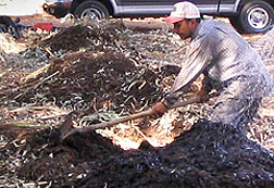 Photo:Compost pile being raked in Jordan. Link to photo information